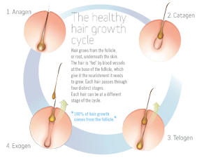 The Hair Growth Cycle